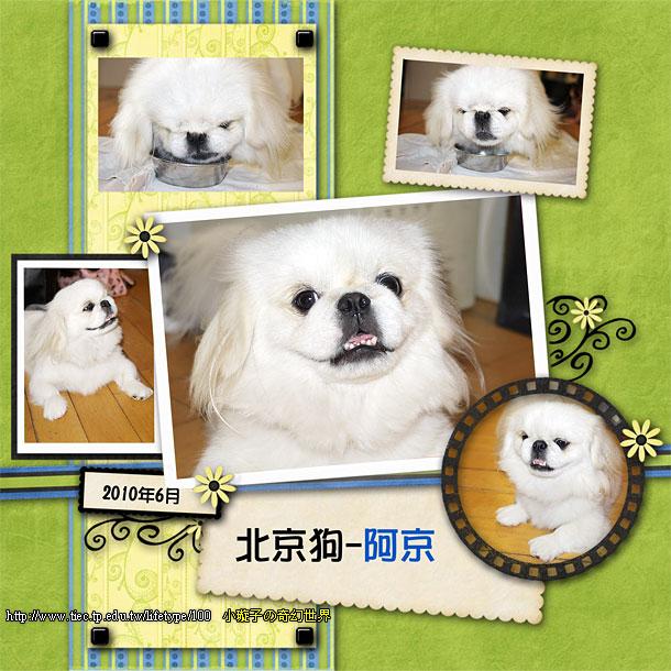 201006dog-book01.jpg